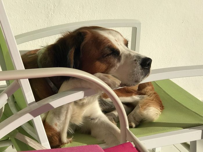 Relaxing Moments Pets Dog Domestic Animals Mammal Indoors  One Animal Animal Themes Lying Down EyeEmNewHere