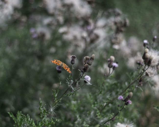 A butterfly. Insect Nature Flower Animal Themes Animals In The Wild No People Growth Fragility Day Beauty In Nature Outdoors Plant Close-up Bee Flower Head Freshness EyeEmNewHere EyeEmNewHere