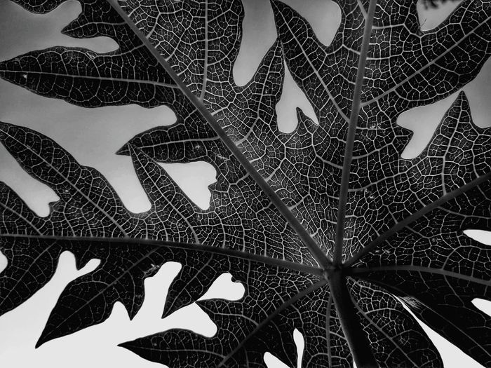 Leaf Tree Full