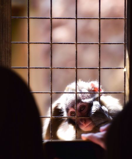 Baby monkey getting curious Macaque Monkey Baby Nature Cute Japan