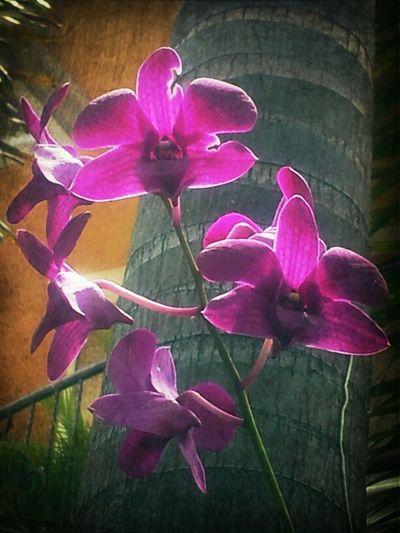 Flowers Beauty Orchids Violet