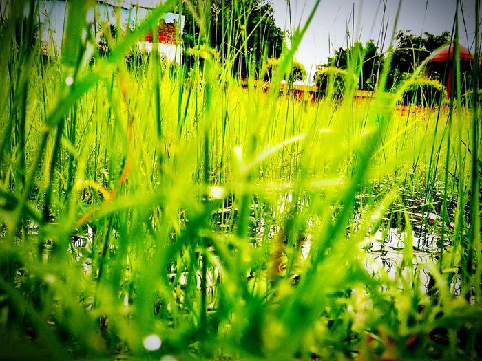 Nature Feel The Breeze Expand Ur Senses By Vaishnava