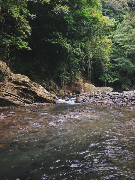 Rock Formation Taiwan Beauty In Nature Day Forest Green Color Growth Jungle Nature No People Outdoors River Rock - Object Rocks Scenics Tranquil Scene Tranquility Tree Water Waterfall Waterfront
