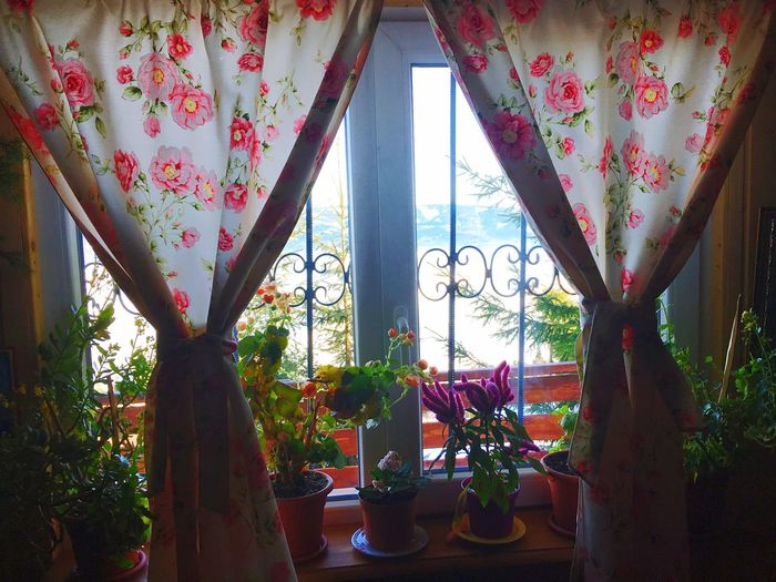 Flower Window Indoors  No People Day Curtain Nature Peace Moldova Winter Sky Mountain Relaxing Tranquil Scene Snow Scenics Nature Chilling Freedom Feel The Journey