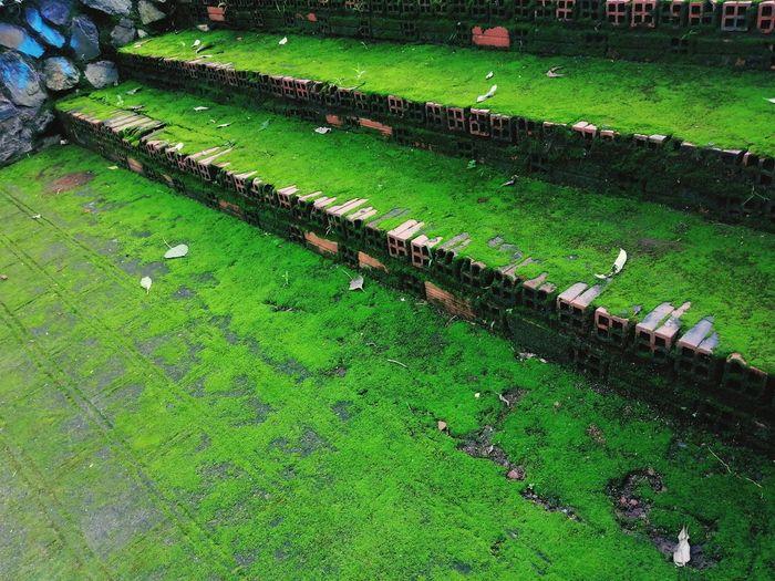 Moss Nature