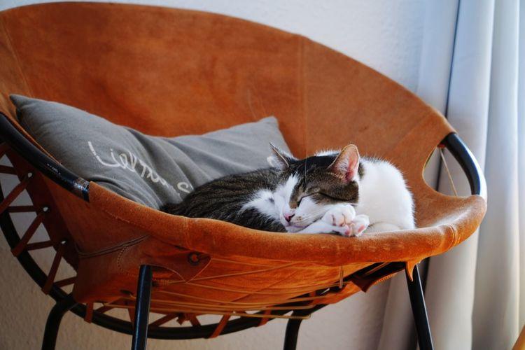 Cat sleeping on chair