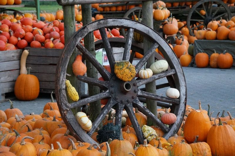 Pumpkins On Wagon Wheel