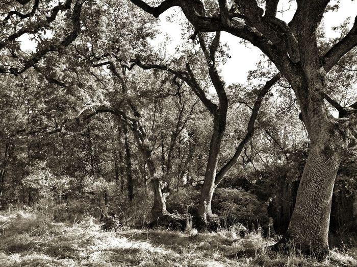 Sheltering Maidu Museum & Historic Site California Trees