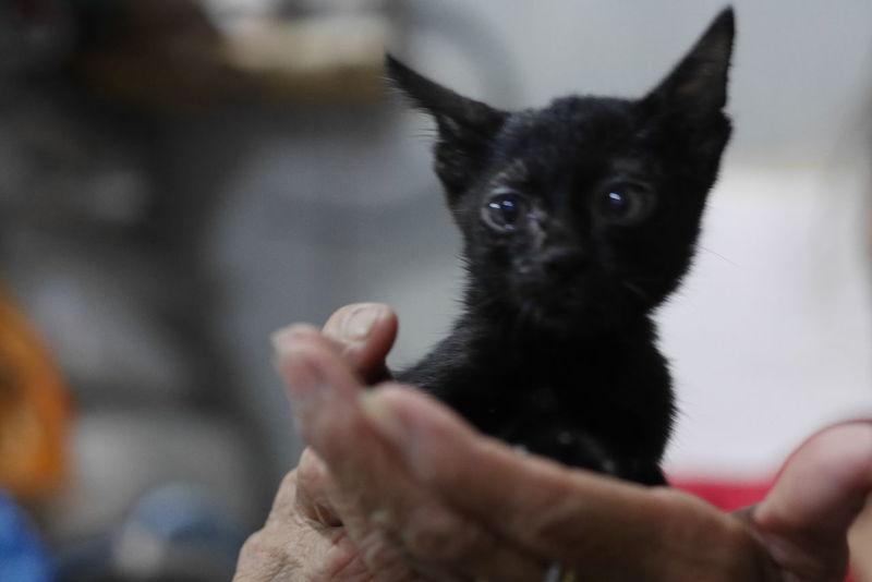 Cat Thailand :) Gf8 EyeEm Thailand Thailand Photos EyeEm Cat Human Hand Pets Dog Domestic Cat Puppy Black Color Close-up Siamese Cat Persian Cat