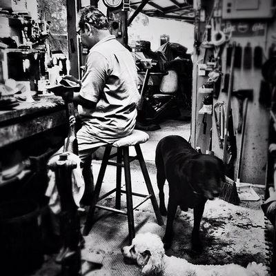 Working with company Workshop Dogs Mcallen Shoerepair Blackandwhite