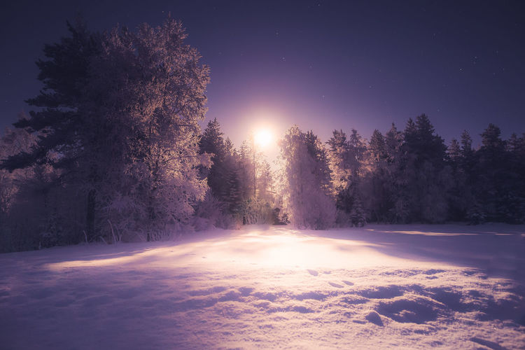 Rising moon Tree Sky Night Winter Snow Nature Cold Temperature No People Beauty In Nature Environment Tranquil Scene Forest Tranquility Scenics - Nature Landscape Illuminated Outdoors Moonlight Photography Star - Space Eye4photography  Snow Covered Frost Frozen Hanging Out