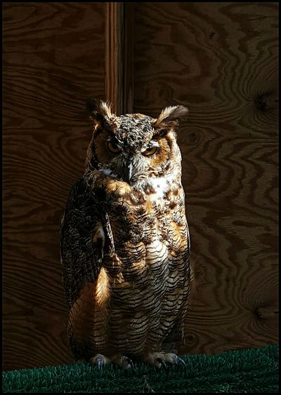 My spirt animal these days😂 hahaa Gotta Find The Humor Owl One Animal Animals Expressions Bird Beautiful Nature