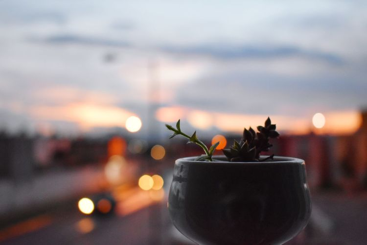 Close-up of potted plant in city at sunset