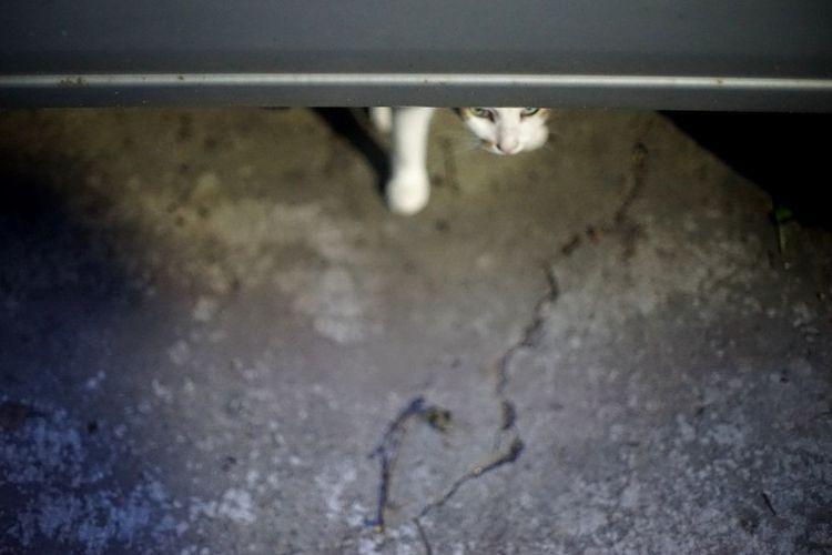 Peeking 街貓