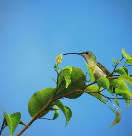 Love humingbirds !! 💚 Humingbird Nature Beauty In Nature