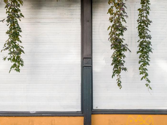 Creeper plants on wall