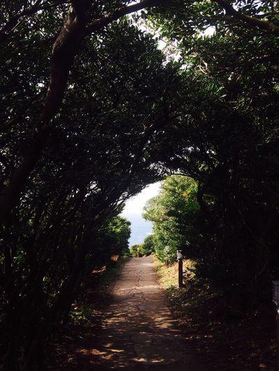 Korea Forest Light