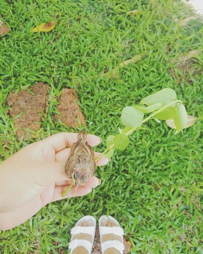 Bird One Person Green Color Grass Human Body Part Nature Real People Outdoors Human Hand High Angle View Day Animal Adult Baby Animals Summer Happy Pet Sparrow Garden Vacation Lovely Nature Freshness Beauty In Nature Green Leaf