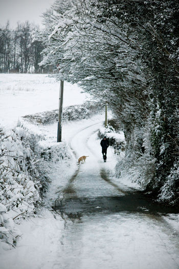 Beauty In Nature Cold Temperature Day Dog Domestic Animals Lane Leisure Activity Lifestyles Mammal Men Nature Outdoors Pets Real People Scenics Snow The Way Forward Track Tree Two Dogs Walking Weather Winter