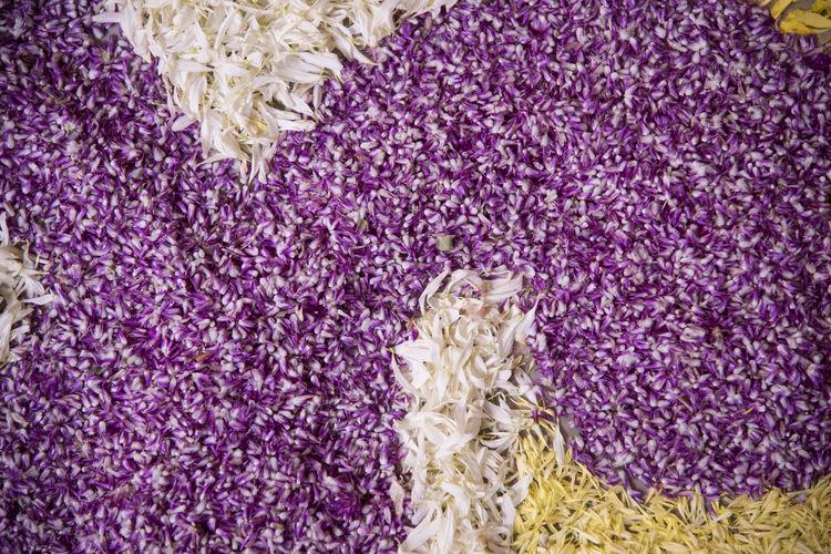 Full frame shot of flower rangoli