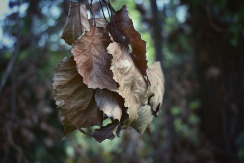 EyeEm Selects Nature Outdoors Forest No People Tree Close-up Beauty In Nature Day Leaf 🍂 LeafEyeEm Gallery EyeEm Nature Lover Eyee