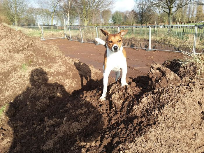 Portrait of dog on heap of dirt
