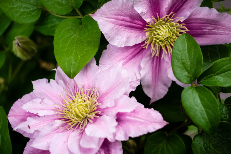 Green Nature Plant Plants Beauty In Nature Blooming Close-up Colorful Flora Flower Flower Collection Flower Head Flowers Fragility Freshness Garden Growth Leaf Leaves No People Petal Pink Color Pollen Purple Purple Flower