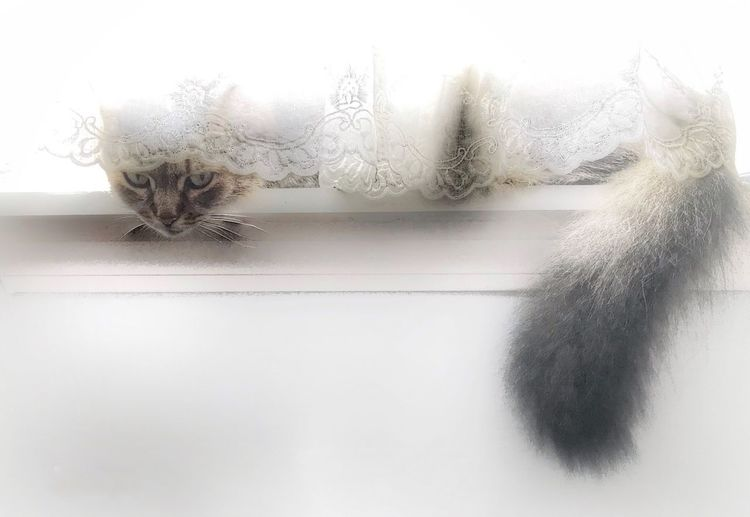 Love Cats Cat Indoors  No People White Color