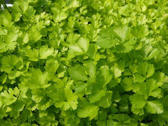 BIO Salad herbs