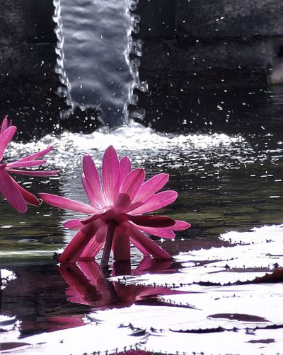 Lotusflower Water Reflections Scenics Creative Light And Shadow Check This Out 😊 Feel The Moment Selective Focus Fine Art Photography Water Reflection 🌈⭐🌠🌍🌞
