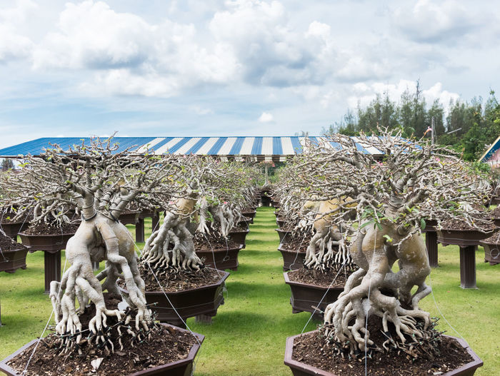 Trees growing at greenhouse against cloudy sky