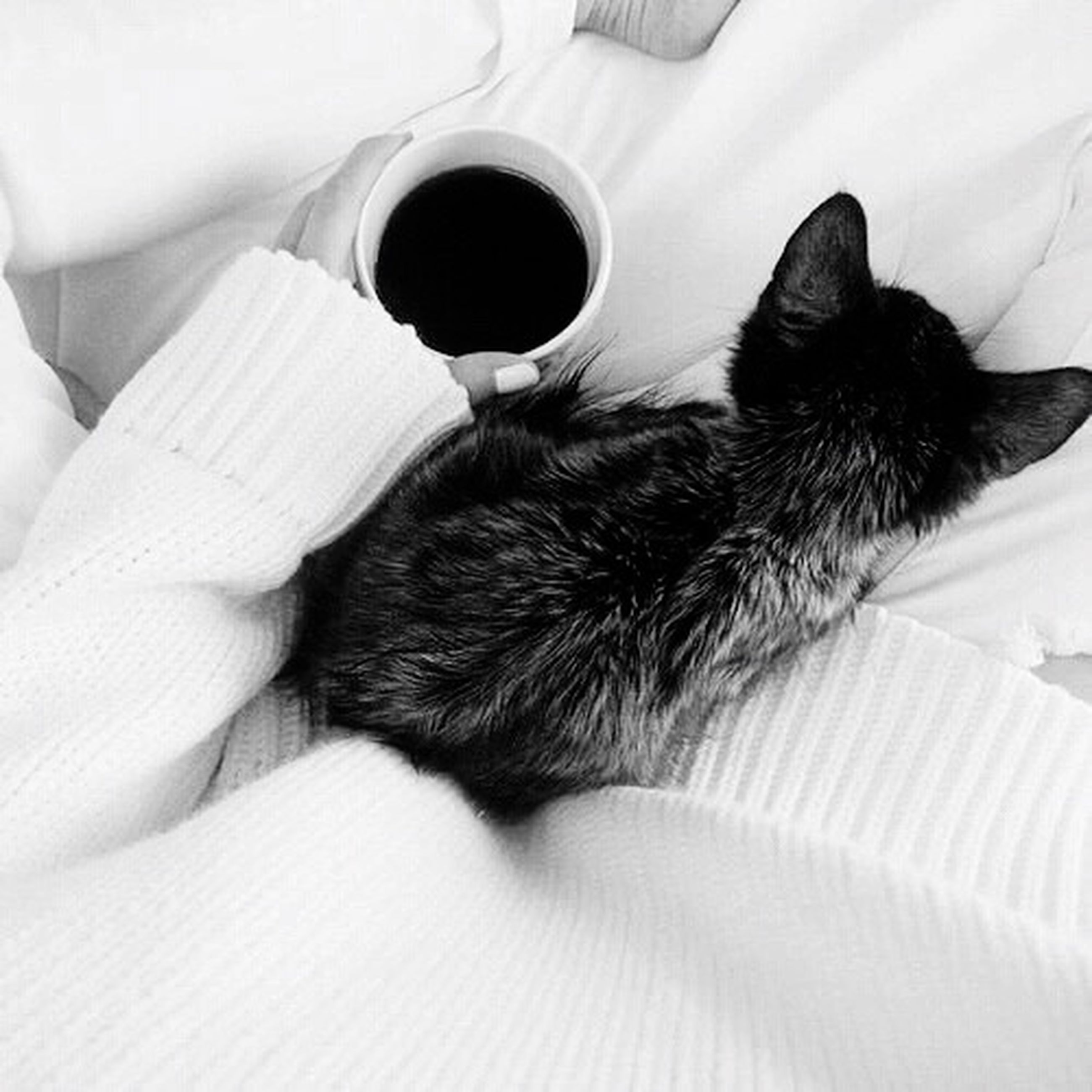 indoors, animal themes, one animal, pets, domestic animals, domestic cat, mammal, cat, bed, relaxation, high angle view, close-up, feline, home interior, black color, resting, sleeping, whisker, home, no people