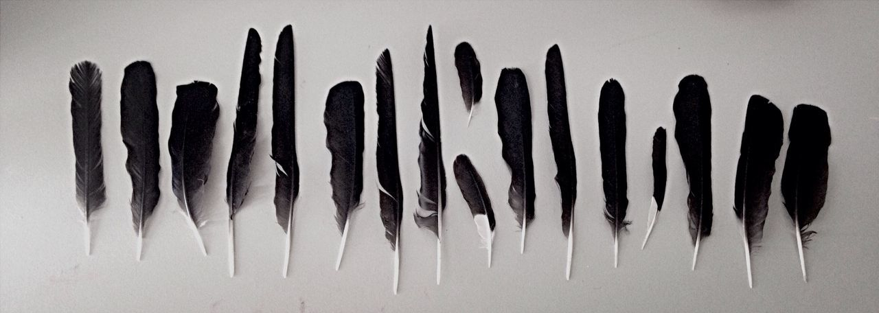 Collection of today Feathers