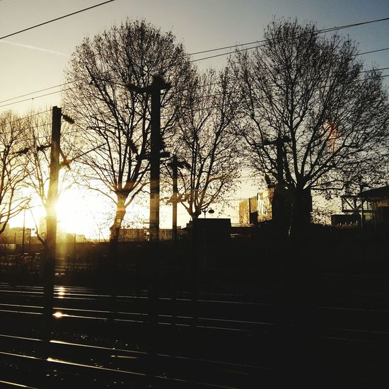 Tree Sky No People Silhouette Sunlight Growth Outdoors Sun Nature Architecture Beauty In Nature Day Ombres Et Lumières Ombres Jour Soleil Levant Soleil Arbres Hiver Sonne Himmel Rail Railway
