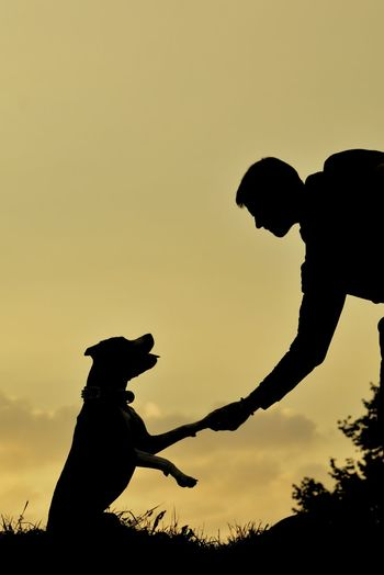 Silhouette man giving handshake to dog against sky during sunset