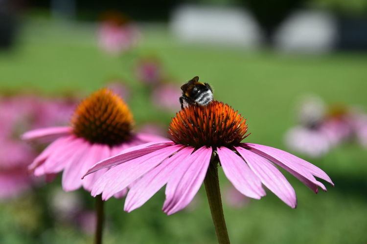 Bee on purple flower at park