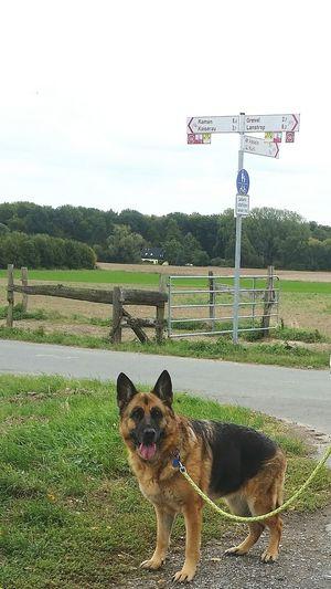 Hah - geschafft !!! Out In The Fields Best EyeEm Shot Dogs Of EyeEm Happy Dog Pets Dog Sky Grass