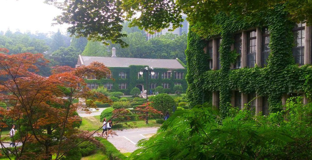Adventure Architecture_collection Crawlers Ivy League Korea Korean University Lush Foliage Manor Spring Summer Green University Campus YonSei University 연세대학교