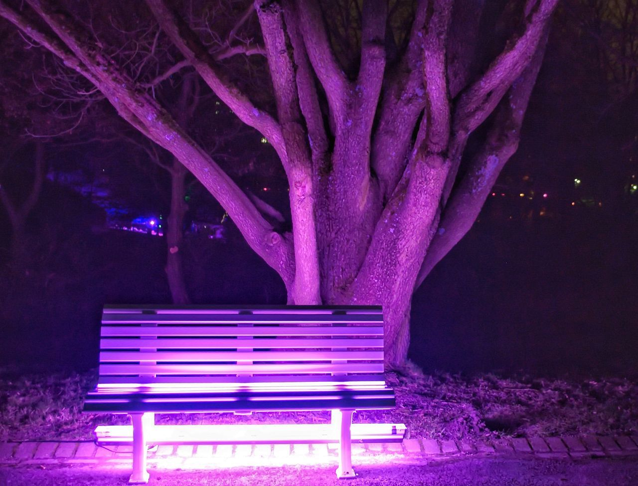 night, seat, bench, purple, illuminated, no people, park, plant, nature, tree, absence, empty, park - man made space, light - natural phenomenon, growth, auto post production filter, outdoors, pink color, beauty in nature, architecture, park bench
