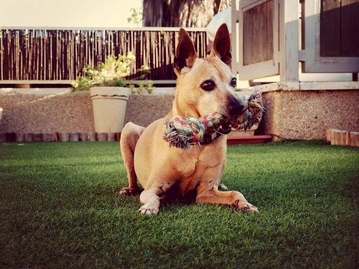 My dog,Toffie