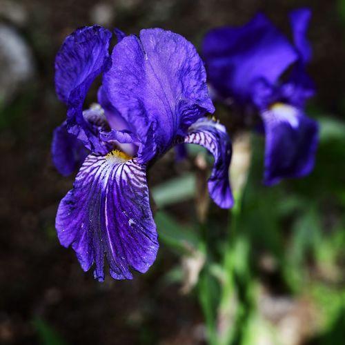 Iris Sharp D850