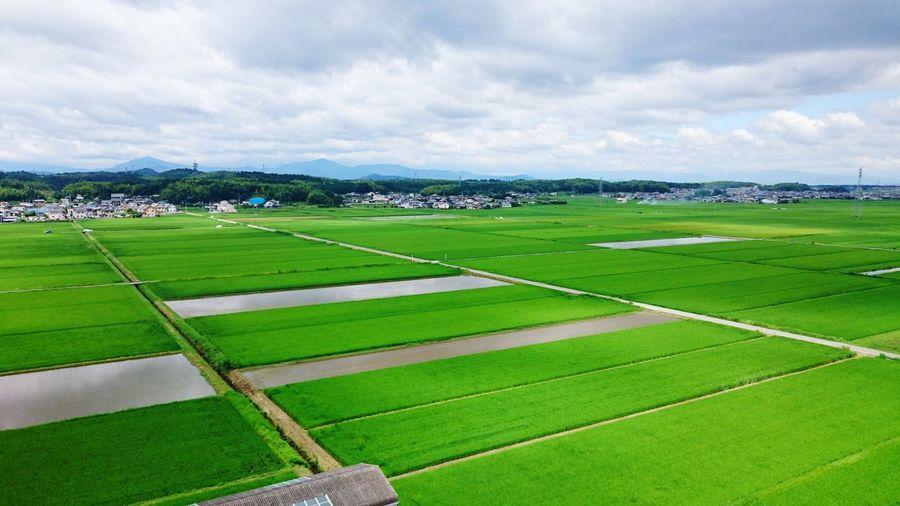 【Mie,Japan】Rice