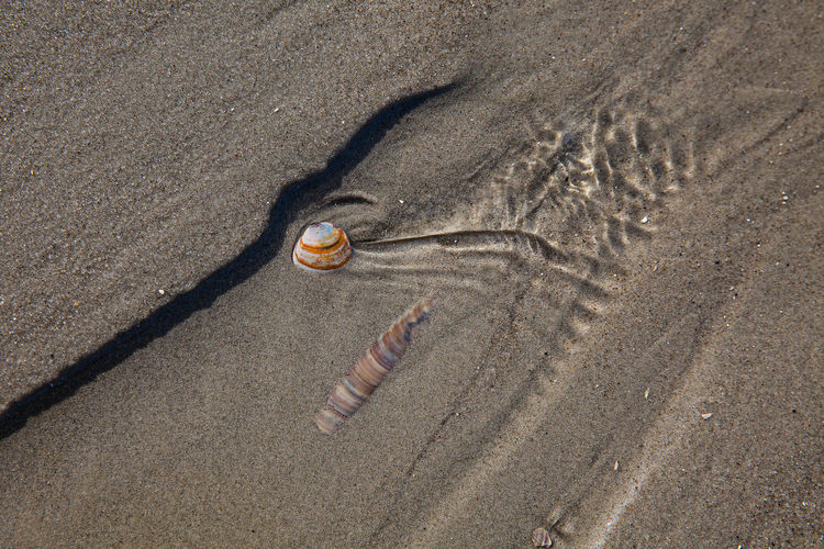High Angle View Of Shells Stuck In Sand At Beach