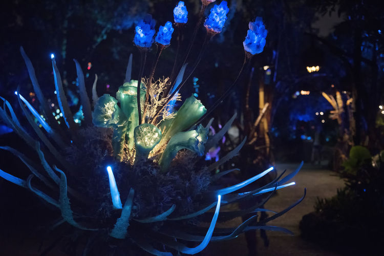 Night time shot of an alien flower in Disney's Animal Kingdom - Pandora. Nikon D810. Alien Plant Life Bioluminescence Disney DisneyWorld Night Photography Nikon D810 Plant Bioluminescent Colorful Flower No People Pandora Vibrant Color