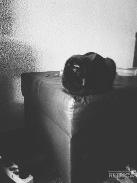Cat GatoNegro Gato😽 Cat♡ Cats 🐱
