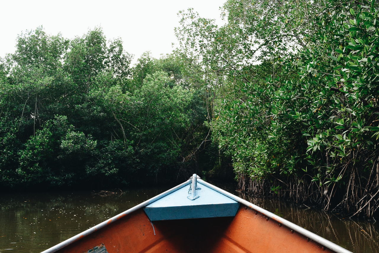 plant, tree, growth, day, nature, no people, green color, water, architecture, built structure, outdoors, tranquility, nautical vessel, forest, beauty in nature, sky, lush foliage, foliage, reflection