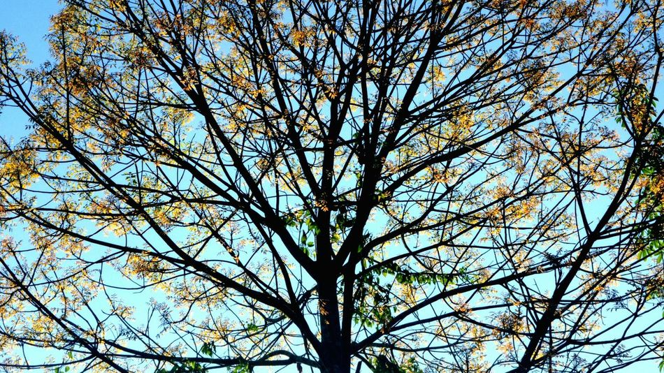 Loving how beautiful life can be when you see it everywhere. It's full of life. Changingcolors Enjoying Life Lifeisbeautiful Trees Trees And Sky
