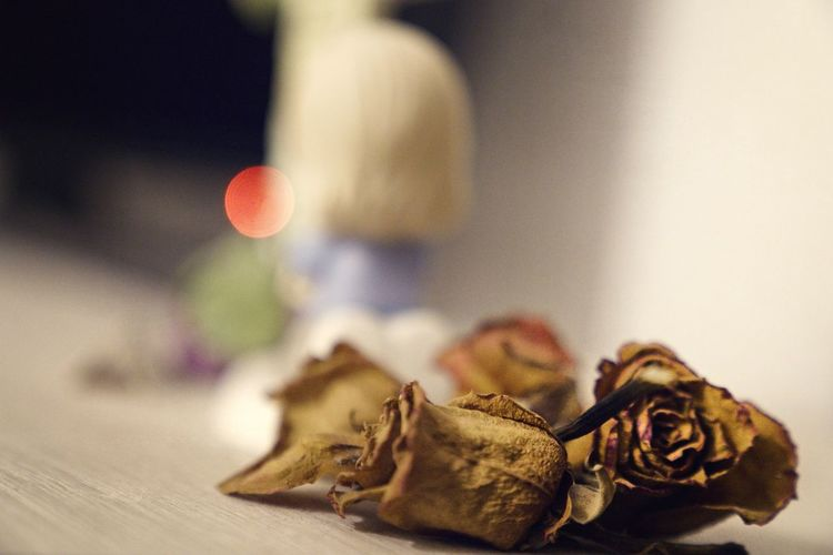 Close-up of dried flowers on table