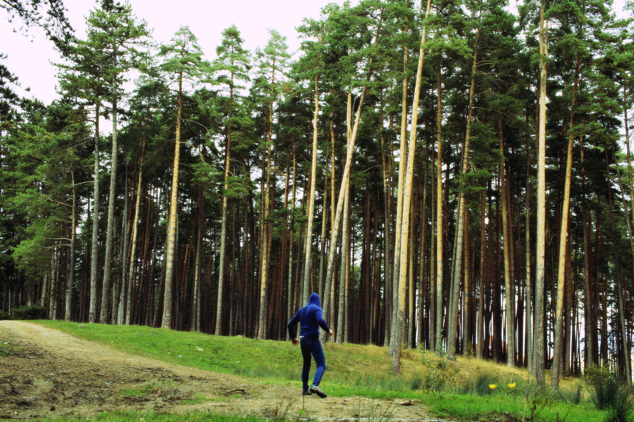 Rear View Of Man Against Trees In Forest