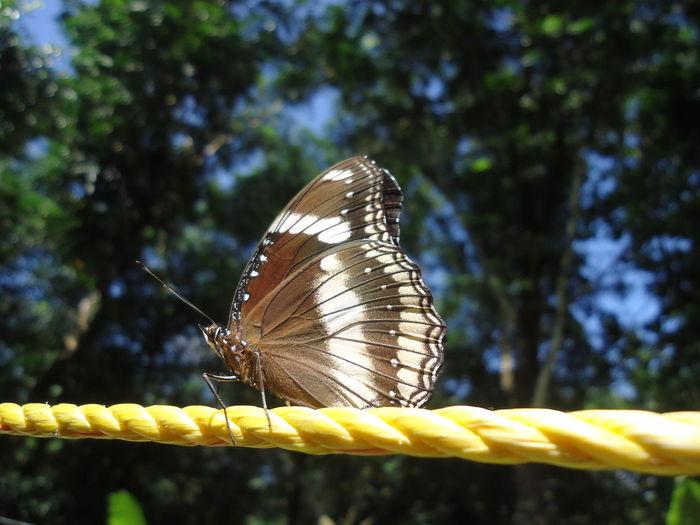 Butterfly Nature Garden Kerala The Gods Own Country ;) Clickz Awsem